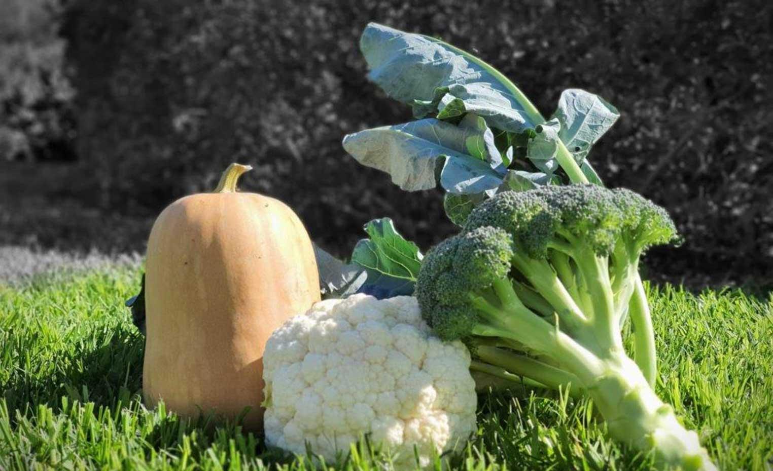 Verduras ecológicas ultracongeladas